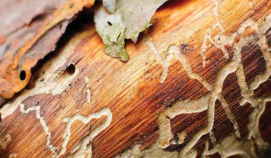 ترک خوردگی و شکستگی مبلمان چوبی